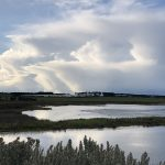 Karaaf Wetlands under threat